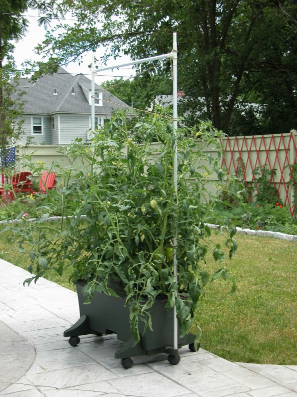 Almost Time to Start Tomatoes