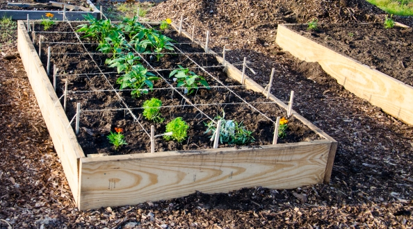 In square foot gardening the plots are divided into one foot squares and depending on the size of the vegetable a set number of vegetables will be planted per square. In the case of green peppers, one plant is advised per square. This is a great way to learn about plant spacing, provide proper air circulation, allow for ease of weeding, and assure a good harvest.