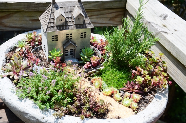 "Mostly, the garden is made of succulents along with herbs such as the rosemary ""tree"" and thyme shrubbery."