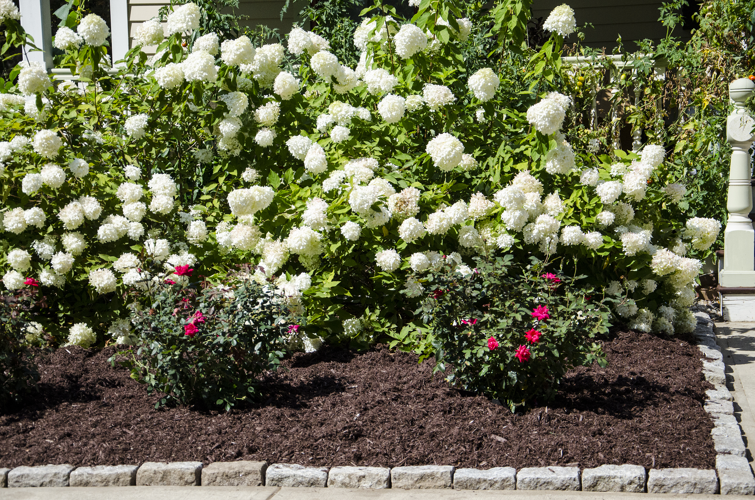 Front Yard Landscaping With Knockout Roses Home Dignity
