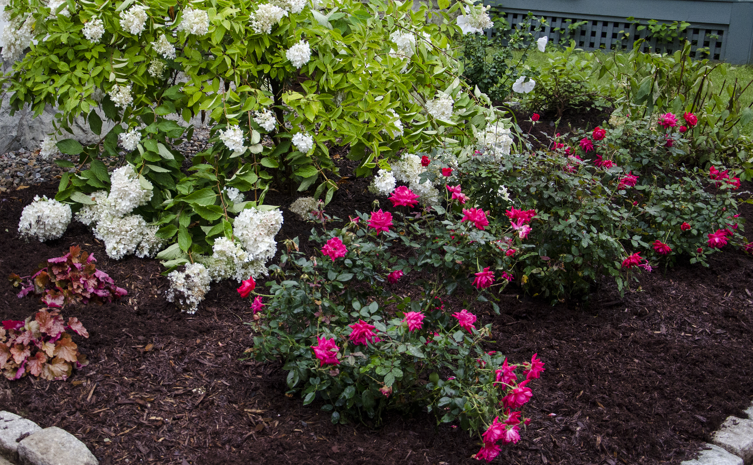 Front Yard Landscaping Roses : Then i covered the landscape fabric with cedar mulch which also lasts