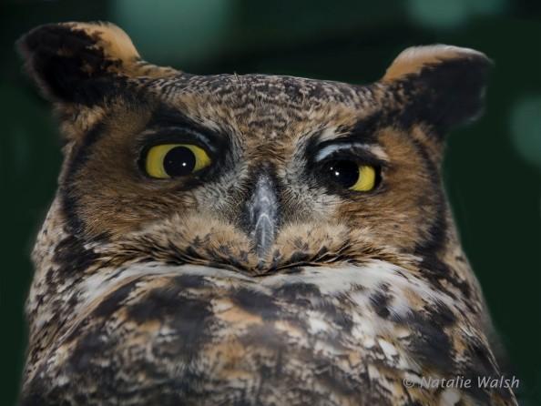 owlimprovedcopy