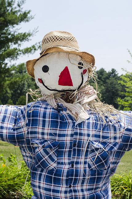 Here is the finished scarecrow.  That fine friendly face was made by Miss Nancy and her helpers.