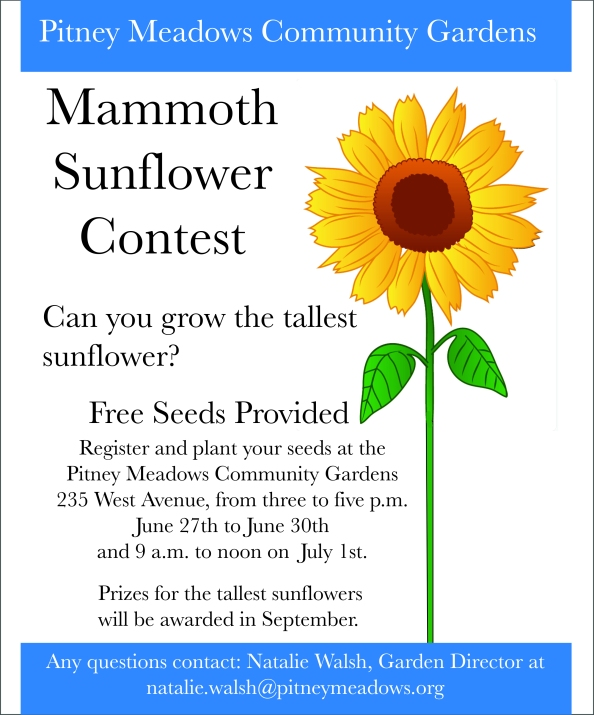 SunflowerContest.jpg