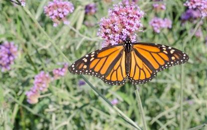 Monarch4